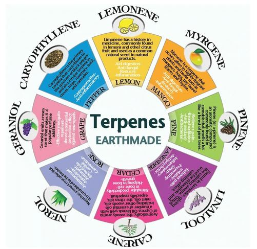 graph of cbd strain terpenes