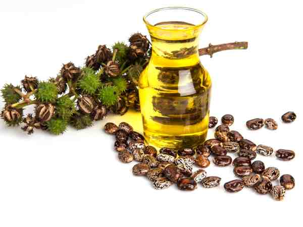 Rizinus-Samen und Öl