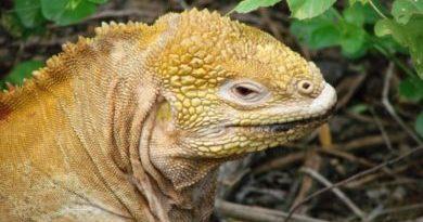 proteccion de islas galapagos