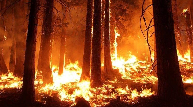 Los incendios en Australia dañan a la naturaleza y al turismo