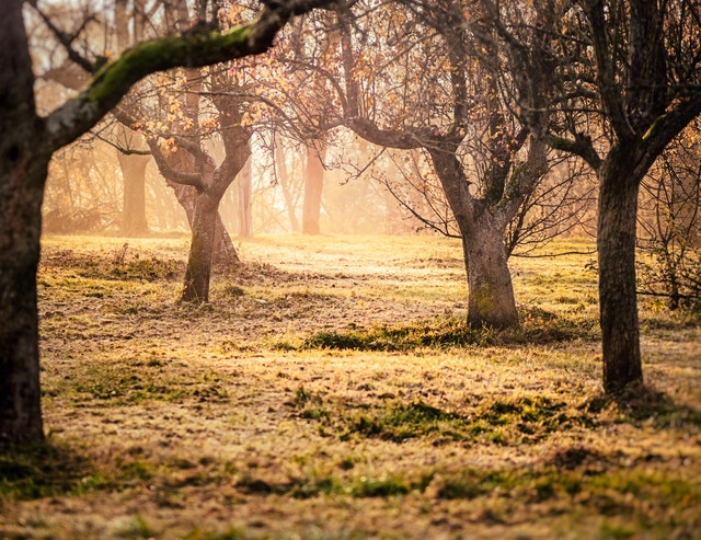 Brown Trees and Green Grass Photo
