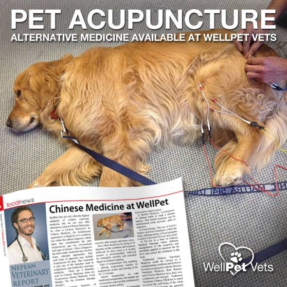 Chinese medicine at WellPet Vets
