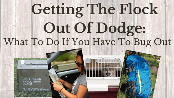 Getting the Flock Out of Dodge: What to do if you have to bug out