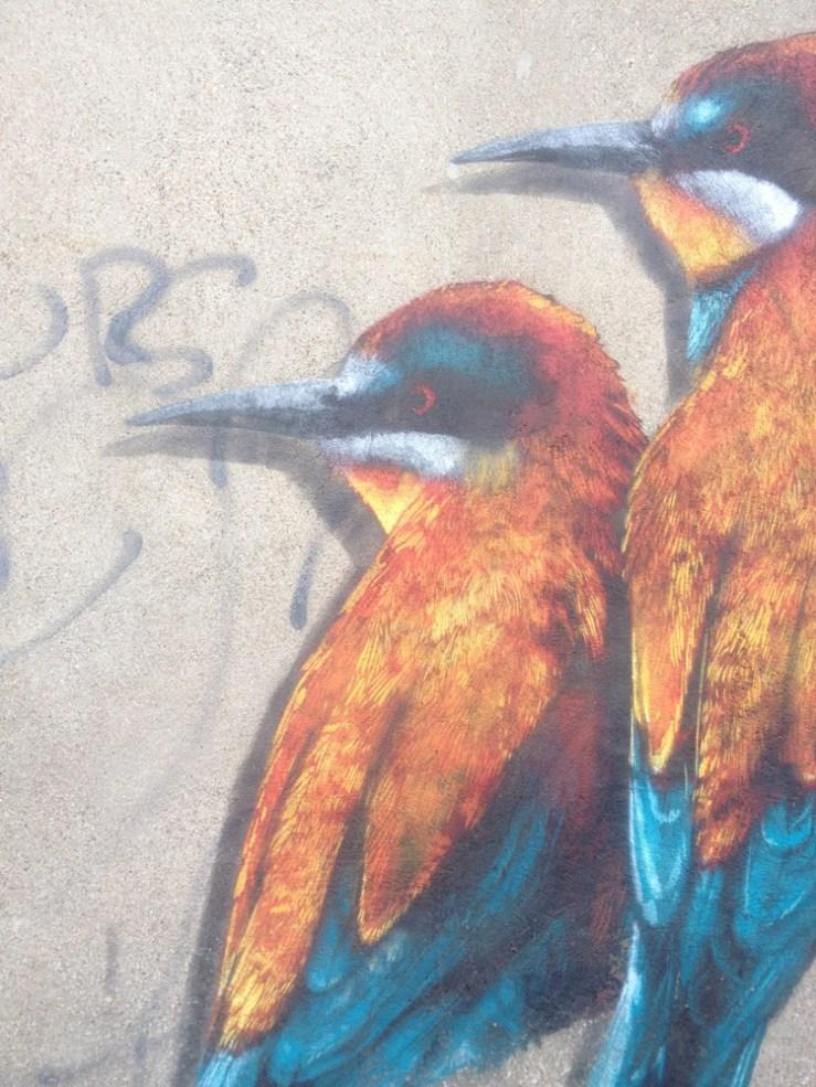 kingfisher1-wellststudio