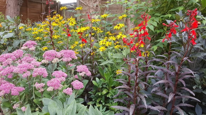Aylesbury Gardening - Garden Maintenance – The Well Tended Garden %