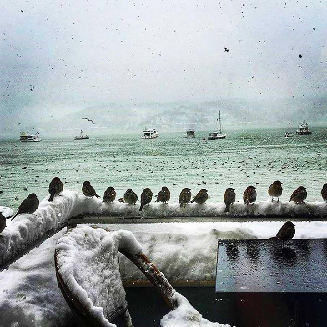 Birds Snow Sea Istanbul