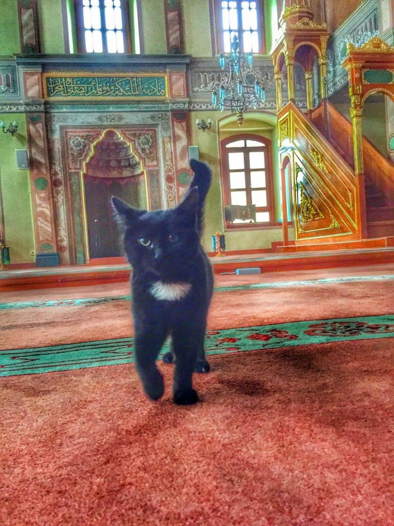 Black Cat In Mosque