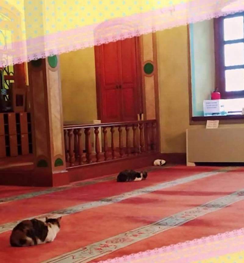 Stray Cats In Mosque