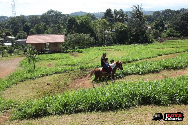 Horse rides at Kuntum Bogor_Quantum Nursery Bogor_Kuntum Farmfield Bogor_Tasha May_welovejakarta_we love jakarta_jakarta with kids_kids in indonesia_what to do with kids on the weekend in jakarta