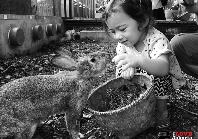 Tasha May_We love jakarta_Kuntum Nurseries_feeding rabbits carrots
