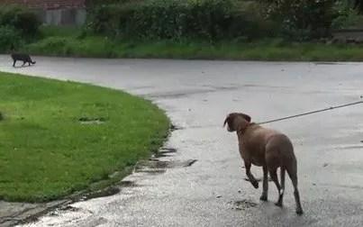 online Hundekurs