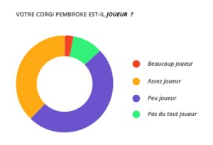 joueur_corgi_pembroke