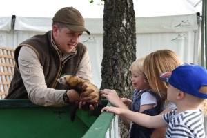 royal welsh spring ferret