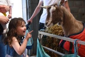 royal welsh spring goat