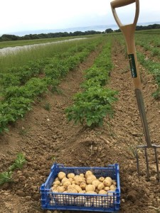 cowbridge farmers potatoes
