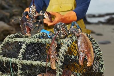 Meet the Fisherman Lobster Pot