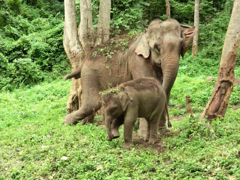 Elefantenbesuch