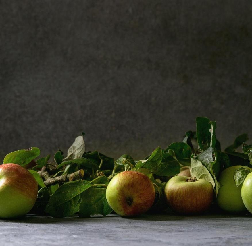 Old apple varieties - nothing smells as good as an apple from our own harvest