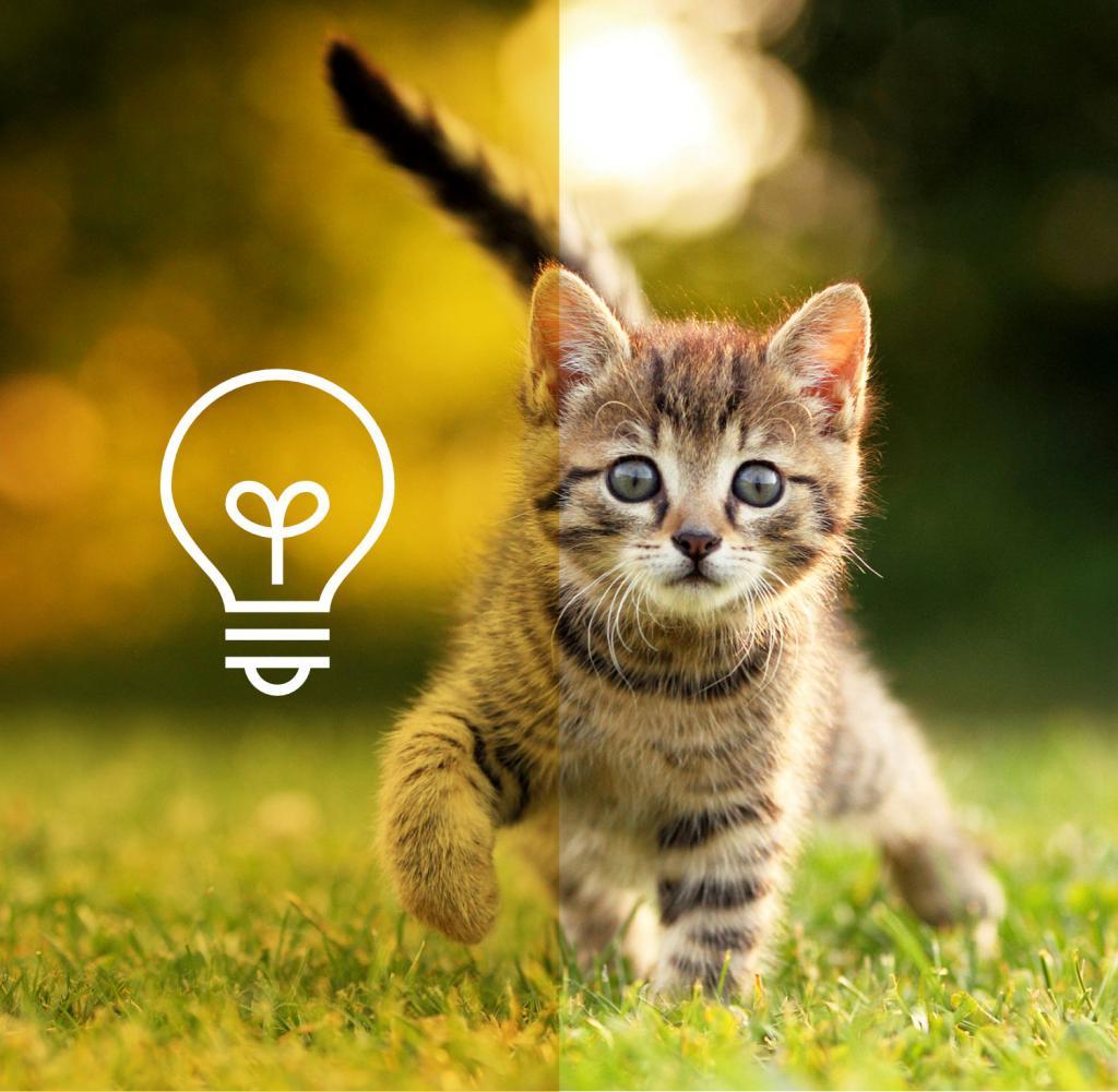 Tiertherapeutin Erklärt Wie Du Eine Katze Dazu Bekommst