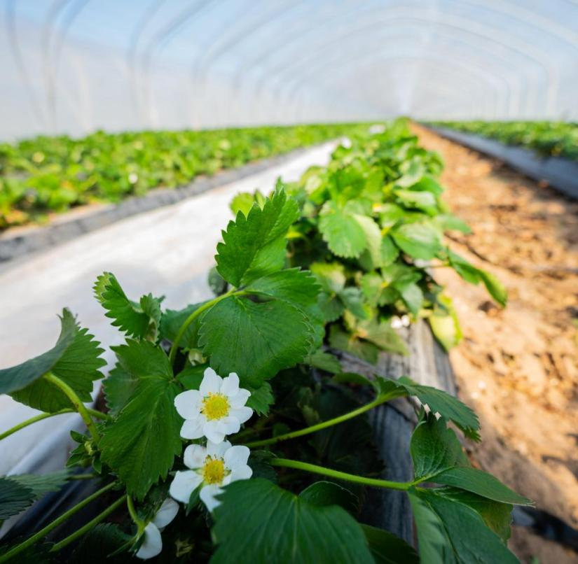 Coronavirus - farmers' association fears crop failures