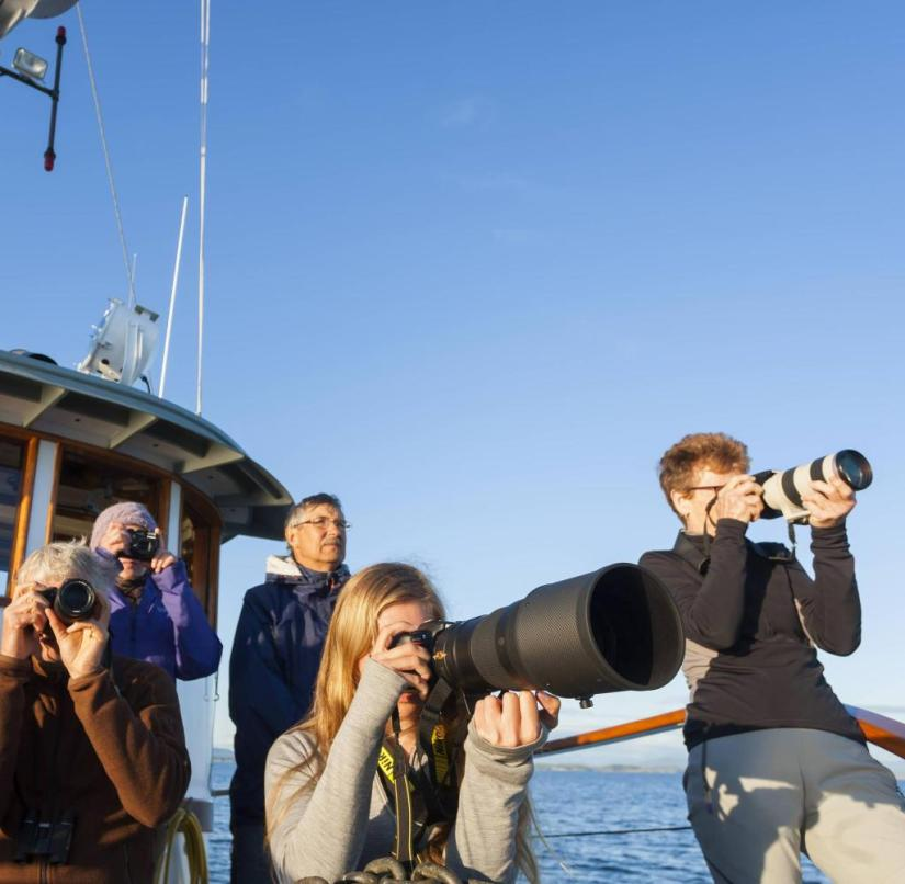 Whale watch tour in Canada: tourists capture the activity of the animals with their cameras