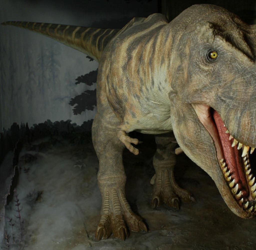 Dinosaurier Viele Dinos Hatten Federn Aber Nicht Zum