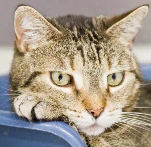 Haustiere Die Größten Gefahrenzonen Für Katzen Im überblick