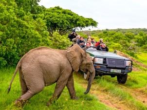 Auf Tuchfühlung mit Elefanten