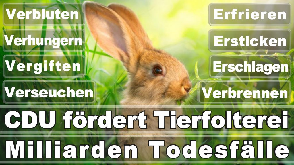 Bundestagswahl 2017 Umfrage Stimmzettel Angela Merkel CDU Tierversuche Tierquälerei Hauptschule Realschule Grundschule Gymnasium