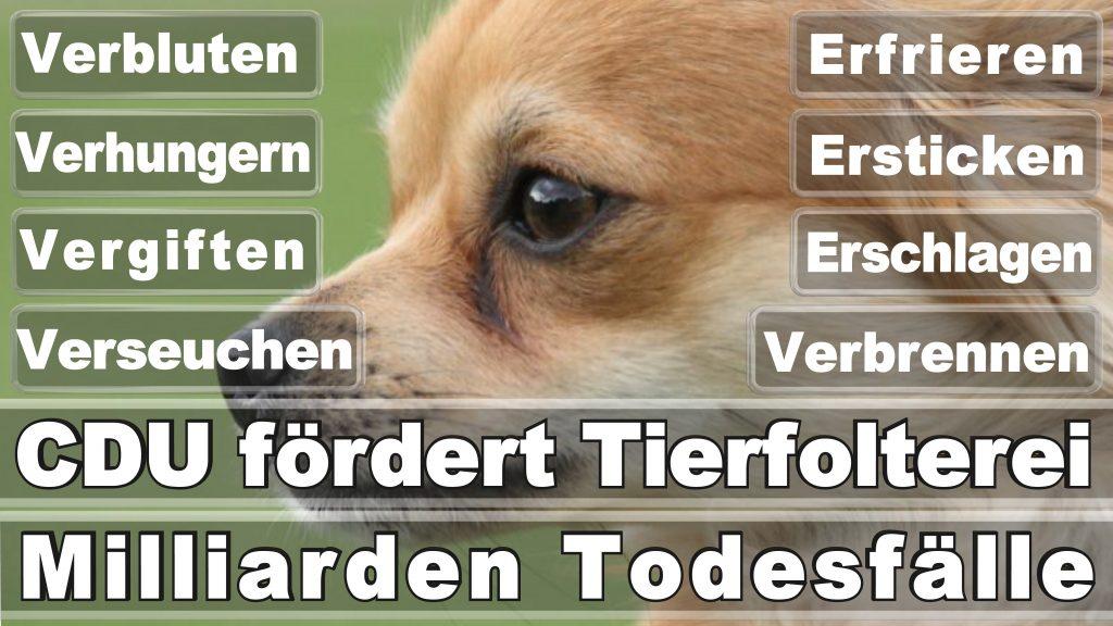 Bundestagswahl 2017 Umfrage Stimmzettel Angela Merkel CDU Tierversuche Tierquälerei Hauptschule Realschule Grundschule Gymnasium (14)