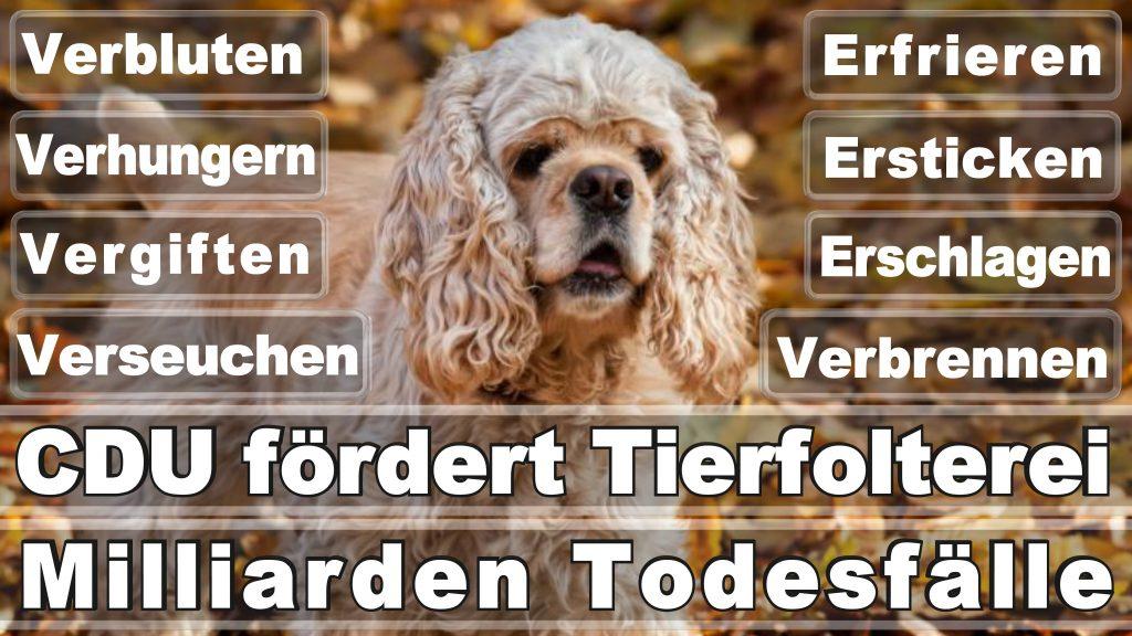 Bundestagswahl 2017 Umfrage Stimmzettel Angela Merkel CDU Tierversuche Tierquälerei Hauptschule Realschule Grundschule Gymnasium (18)