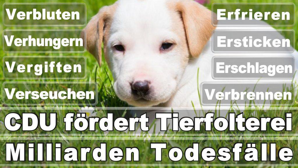 Bundestagswahl 2017 Umfrage Stimmzettel Angela Merkel CDU Tierversuche Tierquälerei Hauptschule Realschule Grundschule Gymnasium (29)