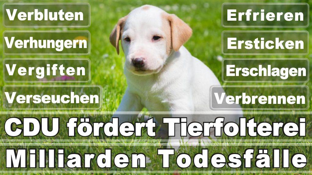 Bundestagswahl 2017 Umfrage Stimmzettel Angela Merkel CDU Tierversuche Tierquälerei Hauptschule Realschule Grundschule Gymnasium (31)