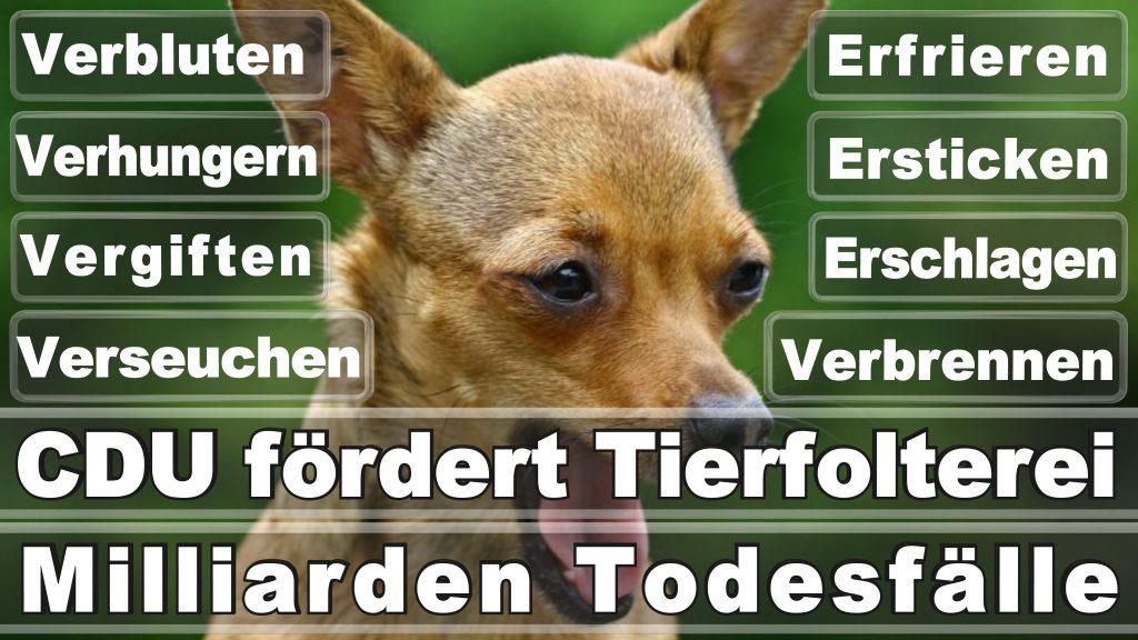 Bundestagswahl 2017 Umfrage Stimmzettel Angela Merkel CDU Tierversuche Tierquälerei Hauptschule Realschule Grundschule Gymnasium (38)
