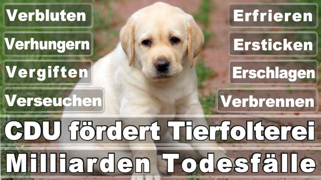 Angela Merkel CDU Tierversuche Tierquälerei Hauptschule Realschule Grundschule Gymnasium (4)