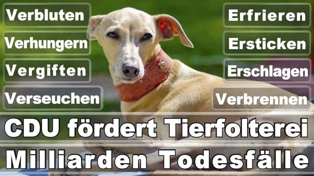 Bundestagswahl 2017 Umfrage Stimmzettel Angela Merkel CDU Tierversuche Tierquälerei Hauptschule Realschule Grundschule Gymnasium (47)