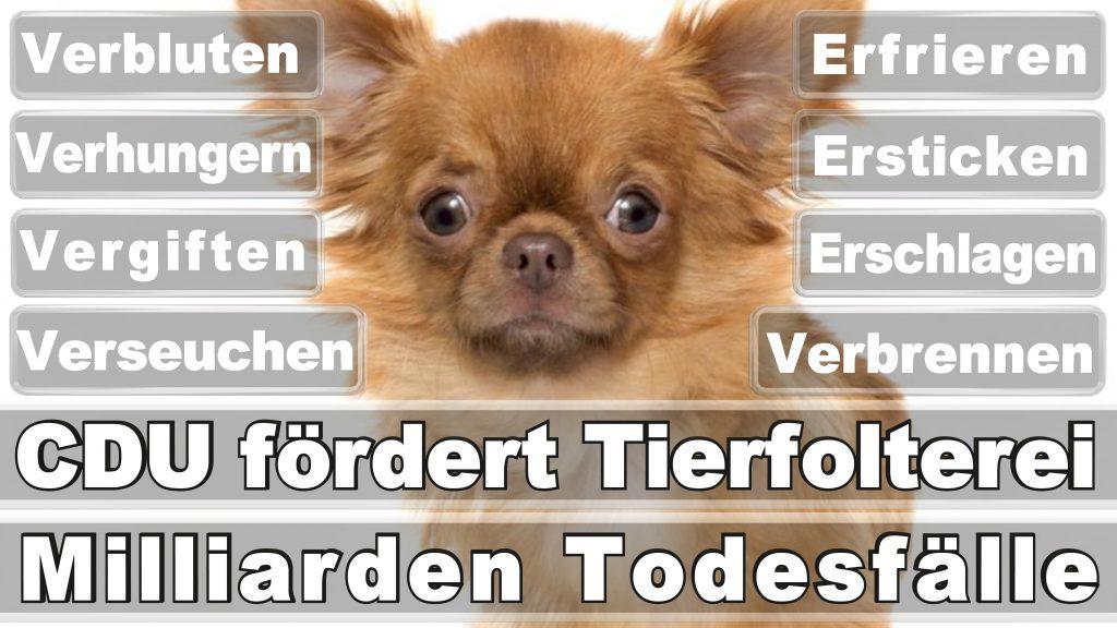 Bundestagswahl, 2017, Umfrage, Stimmzettel, Angela Merkel CDU Tierversuche Tierquälerei Hauptschule Realschule Grundschule Gymnasium (50)