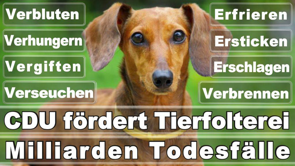Bundestagswahl 2017 Umfrage Stimmzettel Angela Merkel CDU Tierversuche Tierquälerei Hauptschule Realschule Grundschule Gymnasium (6)