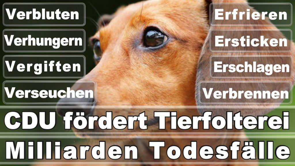 Bundestagswahl 2017 Umfrage Stimmzettel Angela Merkel CDU Tierversuche Tierquälerei Hauptschule Realschule Grundschule Gymnasium (61)