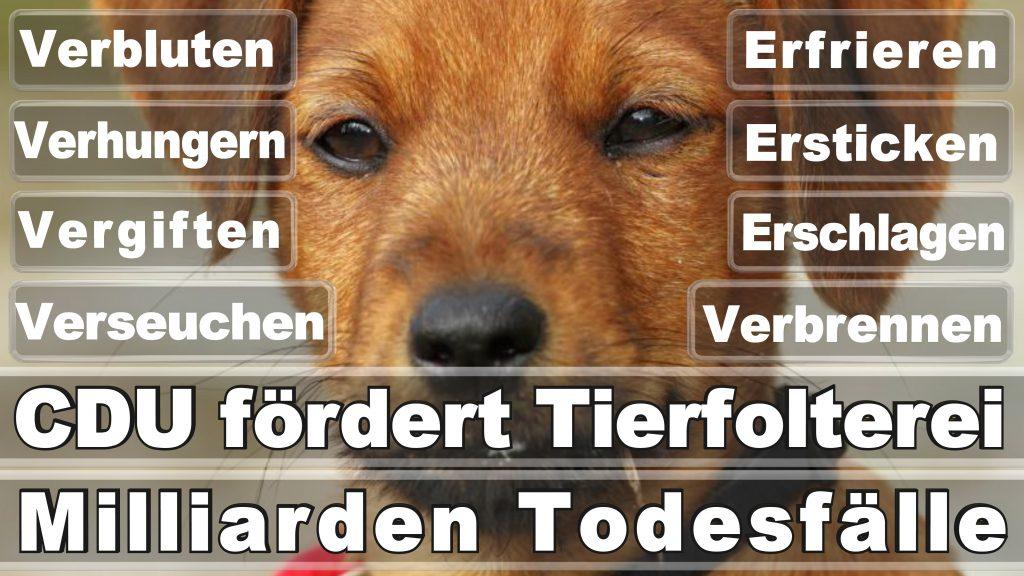 Bundestagswahl 2017 Umfrage Stimmzettel Angela Merkel CDU Tierversuche Tierquälerei Hauptschule Realschule Grundschule Gymnasium (7)