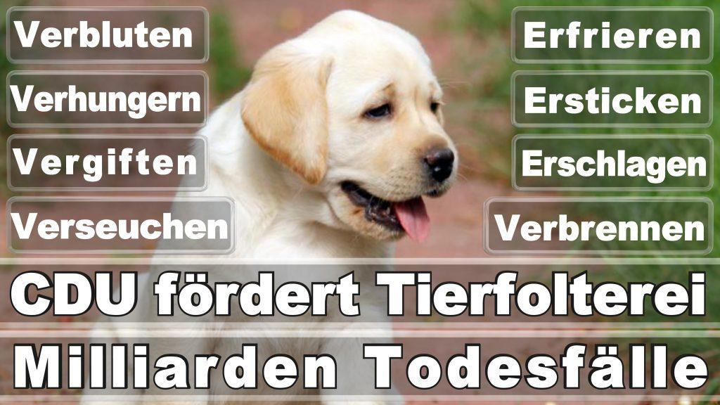 Bundestagswahl 2017 Umfrage Stimmzettel Angela Merkel CDU Tierversuche Tierquälerei Hauptschule Realschule Grundschule Gymnasium (8)