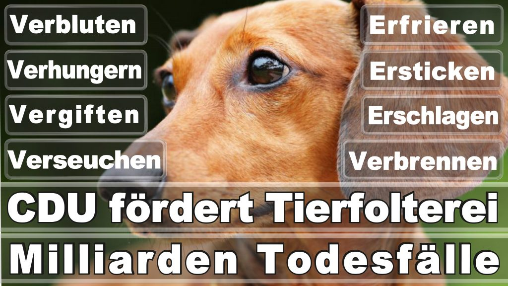 Angela Merkel CDU Tierversuche Tierquälerei Hauptschule Realschule Grundschule Gymnasium (9)