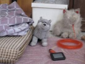 Zu Gast bei einem Warm-showers Host mit Hund