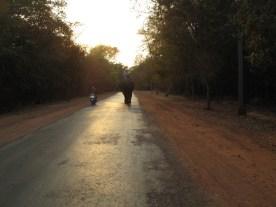 Feierabend- auch für Elefanten