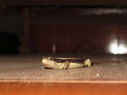 nächtlicher Gast unterm Bett