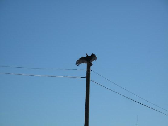 Sie lieben es morgens, die Flügel zu wärmen