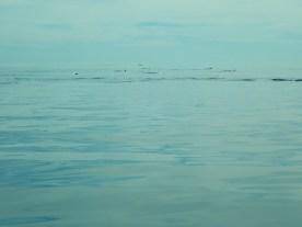 Delphine von Ferne