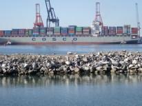 Suchbild mit Pelikanen