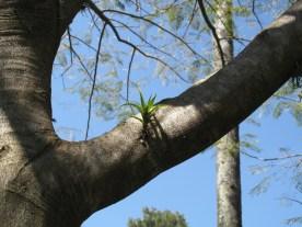 Zuerst setzt sich eine kleine Pflanze fest...