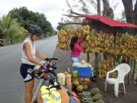 Die Bananen werden mit der Machete abgeschnitten.